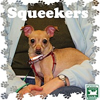 Adopt A Pet :: Squeekers - Fallston, MD