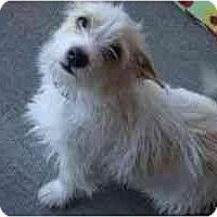 Adopt A Pet :: Cherry Pie - Phoenix, AZ