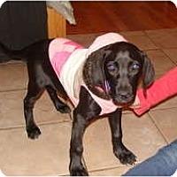 Adopt A Pet :: Lucey - New Boston, NH