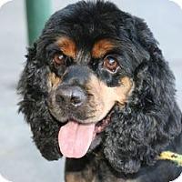 Adopt A Pet :: Bootsy - Canoga Park, CA