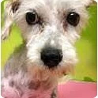 Adopt A Pet :: Viki - pasadena, CA