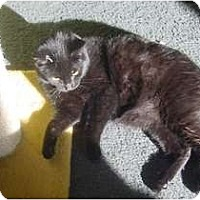 Adopt A Pet :: Higgins - Franklin, NC