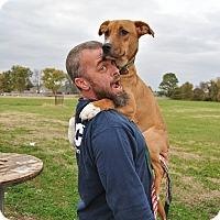 Adopt A Pet :: Aladdin - Hagerstown, MD