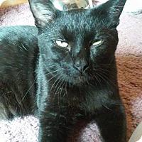 Adopt A Pet :: Sawyer - St. Louis, MO