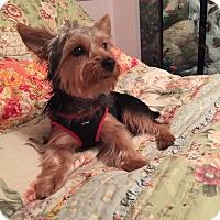 Adopt A Pet :: Poppy - Leesburg, FL