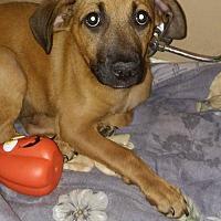 Adopt A Pet :: Manning - Loganville, GA