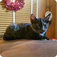 Adopt A Pet :: Zippy - Modesto, CA