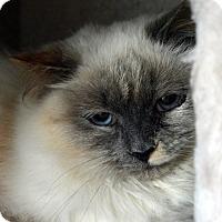 Adopt A Pet :: Cordelia - Richmond, VA