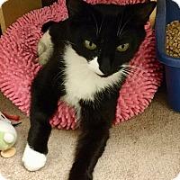 Adopt A Pet :: Rosalynn - Colmar, PA
