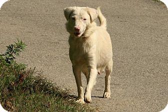 Retriever (Unknown Type) Mix Dog for adoption in Danbury, Connecticut - Rawnie LOVES KIDS