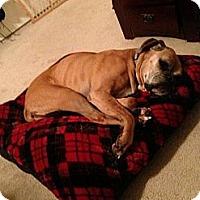 Adopt A Pet :: Vivienne - Scottsdale, AZ