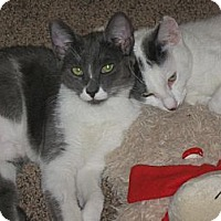 Adopt A Pet :: GigiandCameron - Laguna Woods, CA