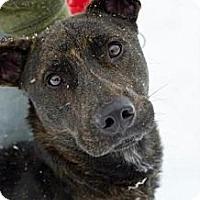Adopt A Pet :: Brach - Painesville, OH