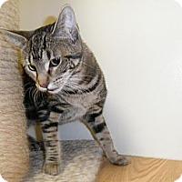 Adopt A Pet :: Jassi - Milwaukee, WI