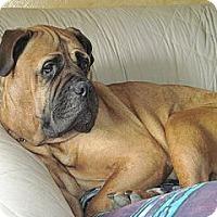 Adopt A Pet :: Tessa - Roy, WA