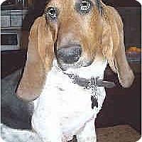 Adopt A Pet :: Lillie - Phoenix, AZ