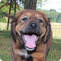Adopt A Pet :: Olexa - Foster, RI
