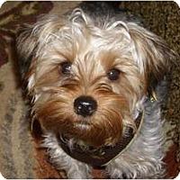 Adopt A Pet :: Mojo - Riverview, FL