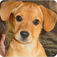 Adopt A Pet :: SUNNY - Hendersonville, TN