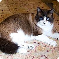 Adopt A Pet :: Magic - Irvine, CA
