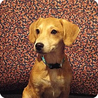Adopt A Pet :: Andy - Murphy, NC