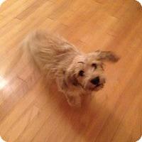 Adopt A Pet :: Bullseye - Phoenix, AZ