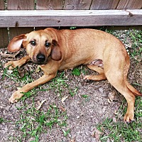 Hound (Unknown Type) Mix Dog for adoption in Lake Charles, Louisiana - Queen