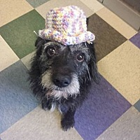 Terrier (Unknown Type, Medium) Mix Dog for adoption in Kansas City, Missouri - Monte