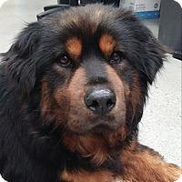 Adopt A Pet :: Bear - North Bend, WA