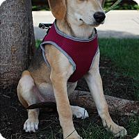 Adopt A Pet :: Delilah - Richmond, VA