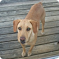Adopt A Pet :: Rosie Gale - Homewood, AL