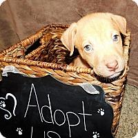 Adopt A Pet :: Oakley - Grand Rapids, MI