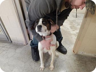 Boxer Mix Dog for adoption in Pikeville, Kentucky - Annabell
