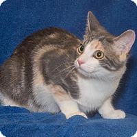 Adopt A Pet :: Nellie - Elmwood Park, NJ