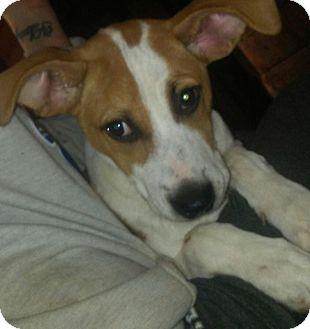 Hound (Unknown Type) Mix Puppy for adoption in Old Bridge, New Jersey - Annie