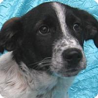 Adopt A Pet :: Carson Bene-Care - Cuba, NY