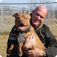 Adopt A Pet :: Ceasar - Elyria, OH