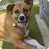 Adopt A Pet :: Sadie - Germantown, TN