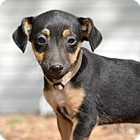Adopt A Pet :: Tidas - Glastonbury, CT