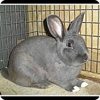 Adopt A Pet :: Buck - Williston, FL
