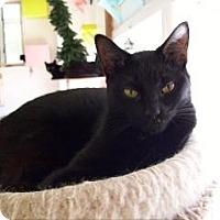 Adopt A Pet :: Eric - Griswold, CT