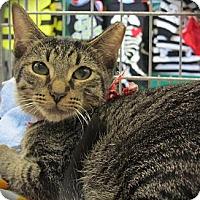 Adopt A Pet :: Herbie Jr. - Seminole, FL