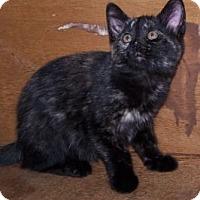 Adopt A Pet :: K-Lillian3-June - Colorado Springs, CO