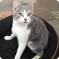 Adopt A Pet :: Gabrielle - East Hanover, NJ