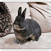 Adopt A Pet :: Jasper - Williston, FL