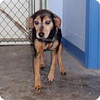 Adopt A Pet :: MILA - Scottsburg, IN