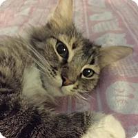Adopt A Pet :: Princess Aurora - Scottsdale, AZ