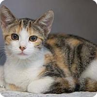 Adopt A Pet :: Della - Merrifield, VA