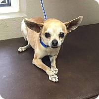 Adopt A Pet :: Dandy - Las Vegas, NV