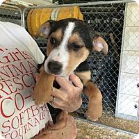 Adopt A Pet :: Alicia meet me 4/7 - Manchester, CT